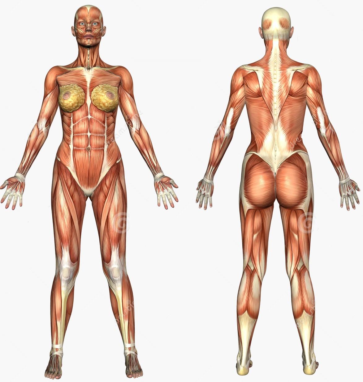 Evde pektoral kaslar için temel egzersizler